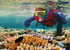 Great Barrier Reef Snorkel & Swim