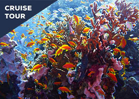 Great Barrier Reef & Down Under Cruise Tour