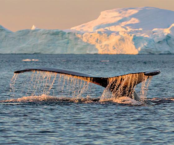 Greenland: North Atlantic Odyssey