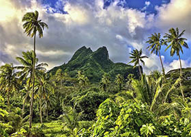 Star Collector Dreams of Tahiti: A South Pacific Crossing