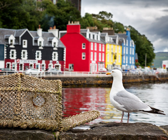 Star Collector: Irish Cliffs, Scottish Castles & Norwegian Fjords