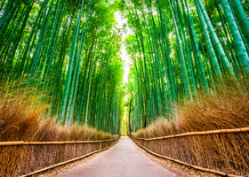 walkway with bamboo on sides in japan